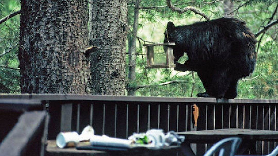 Arizona Game and Fish Wants State to Be Bear Aware   All About
