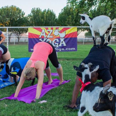 Setting World Records With Goat Yoga