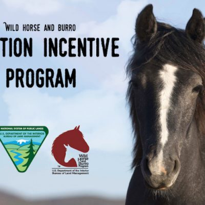 BLM Offering Incentive For Adopting Horses