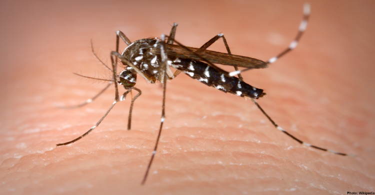 Consumer Reports: Top-Tested Insect Repellents For 2021