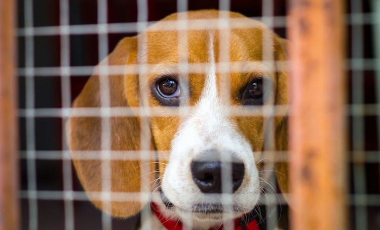 Maricopa County Animal Shelter Aims to 'Empty the Shelters' with Event