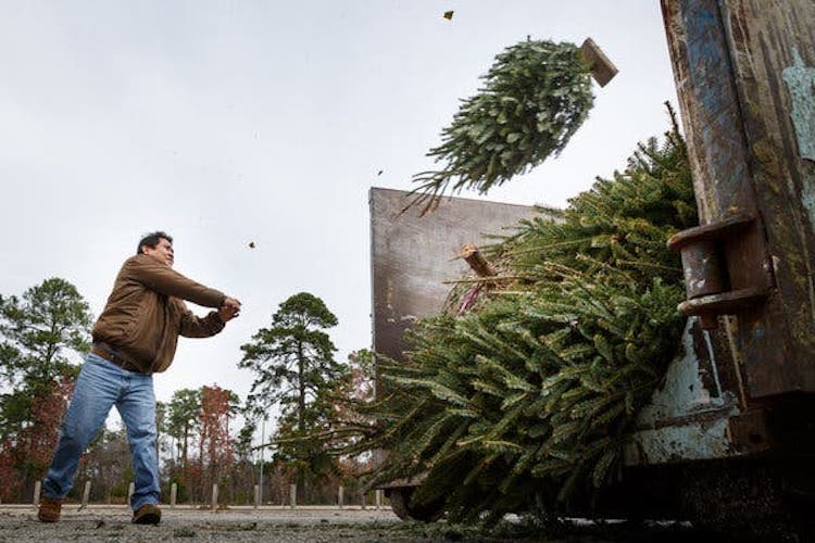 How To Recycle Real Christmas Trees