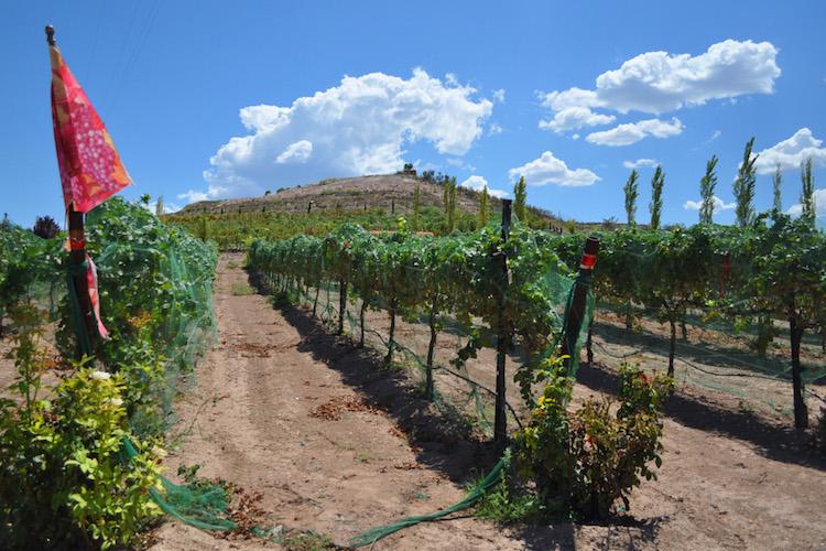 Valley Verde Close To Becoming Designated Wine Region