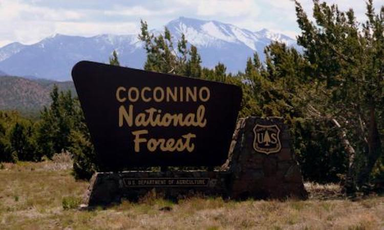 3 National Forests Lift Virus and Fire Restrictions in Arizona