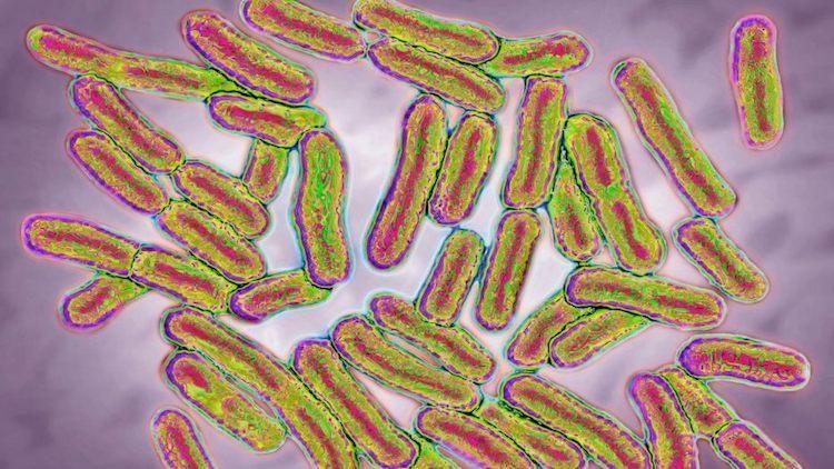 Salmonella Outbreak Hits 23 States