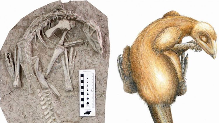 Paleontologists Discover New Perfectly Preserved Dinosaur Species in China