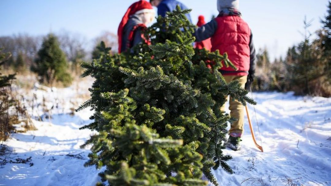Christmas Tree Permits Arizona 2020 Prescott National Forest Christmas Tree Permits Available Oct. 19