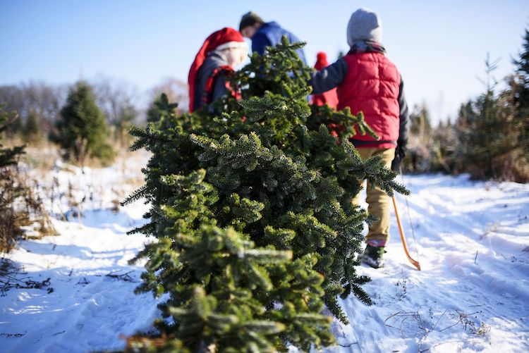 Tonto National Forest Christmas Tree Permit Sales