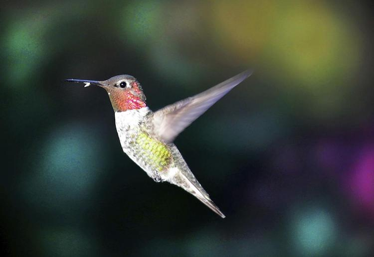 "Sierra Vista Wants to Make ""Hummingbird Capital"" Nickname Official"