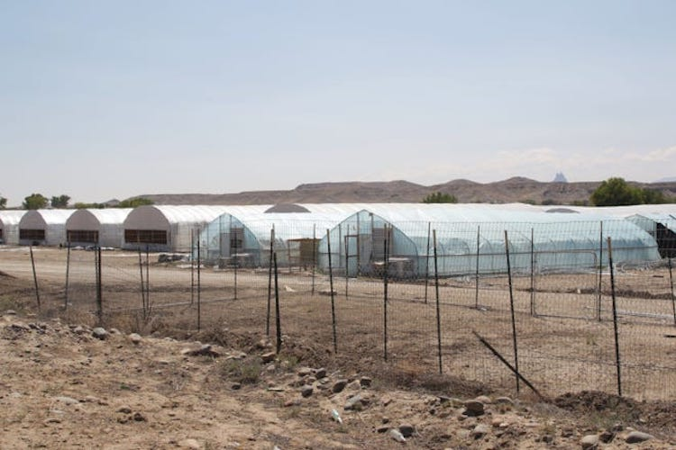 Navajo Nation Suing Over Marijuana Farms