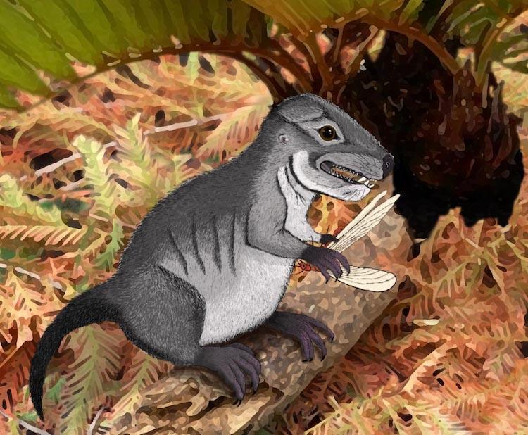 New Mammal Species Fossil Found in Northeast Arizona