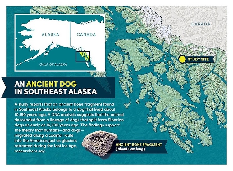 Study Shows Dogs Came to North America with the Earliest Humans