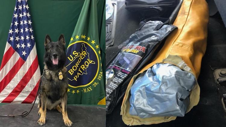 Yuma Sector Border Patrol Dog Sniffs Out Two Major Drug Seizures in a Week