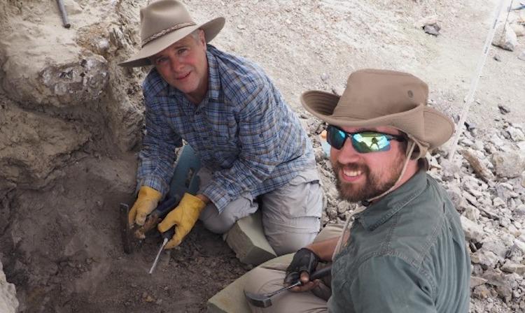 Arizona Museum of Natural History Volunteers Unearth 75 Million Year Old Dinosaur