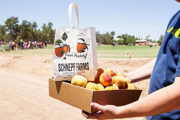UPICK Peaches Are Back At Schnepf Farms in Queen Creek